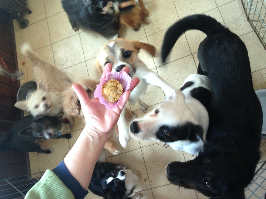 Pupcakes for Rescue Dogs